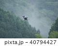 アオサギ サギ 飛翔の写真 40794427