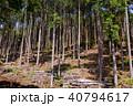 杉 木々 森林の写真 40794617