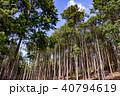 杉 木々 森林の写真 40794619