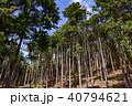 杉 木々 森林の写真 40794621