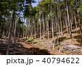 杉 木々 森林の写真 40794622