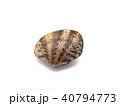 アサリ 貝 食べ物の写真 40794773