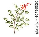 南天 植物 縁起物のイラスト 40796320