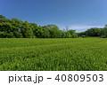 新緑 茶畑 所沢市の写真 40809503