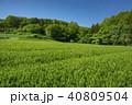 新緑 茶畑 所沢市の写真 40809504