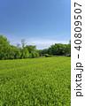 新緑 茶畑 所沢市の写真 40809507