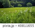 新緑 茶畑 所沢市の写真 40811655