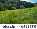 新緑 茶畑 所沢市の写真 40811656