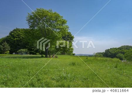 新緑の比良の丘 所沢で一番標高が高い丘 40811664