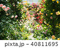 バラ園 薔薇 バラの写真 40811695