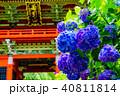 雨引観音の紫陽花 40811814
