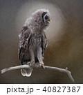 ふくろう フクロウ 梟のイラスト 40827387