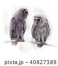 ふくろう フクロウ 梟のイラスト 40827389