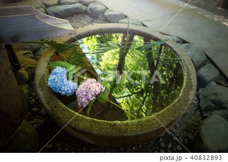 井戸の紫陽花 40832893