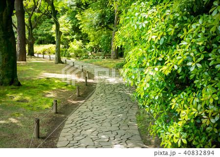 公園の木々と散歩道 40832894