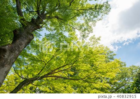 新緑の木々と青空と雲 40832915