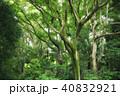 樹木 森林 森の写真 40832921