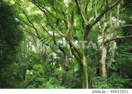 深い森の中 40832921