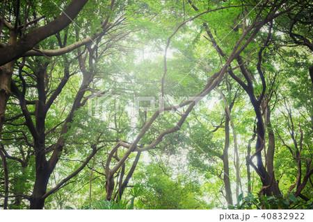 深い森の中 40832922