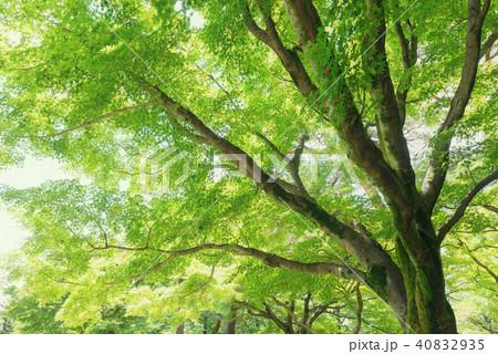 森林公園の樹木 40832935