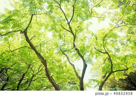 森林公園の樹木 40832938