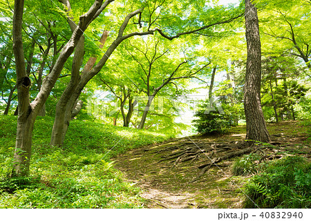 森の中のハイキングトレイル 40832940