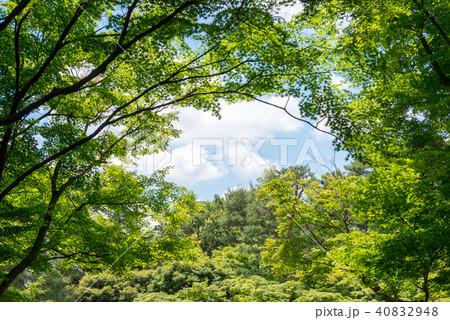 新緑の木々 40832948