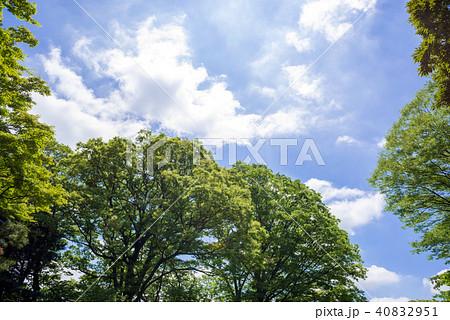 新緑の木々と青空と雲 40832951