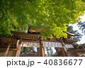 新緑の高麗神社 境内 埼玉県日高市 40836677