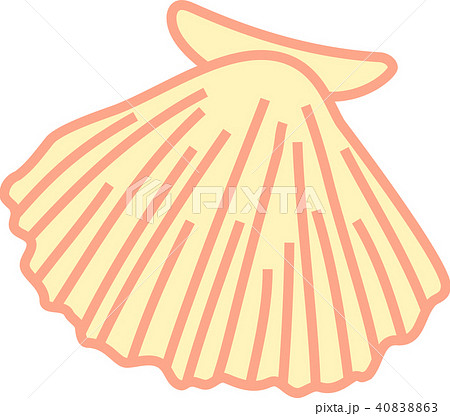 ほたて貝 イラスト のイラスト素材 40838863 Pixta