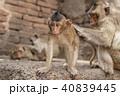 動物 ベビー さるの写真 40839445