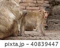 動物 ベビー さるの写真 40839447