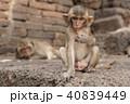 動物 ベビー さるの写真 40839449