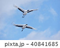 青空 丹頂 丹頂鶴の写真 40841685