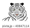 タイガー トラ 虎のイラスト 40847114