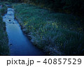 蛍 ゲンジホタル 夜の写真 40857529