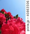 つつじ 花 春 背景  40863506