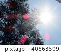 新緑 空 風景 背景  40863509
