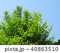 新緑 空 風景 背景  40863510