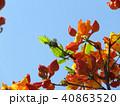 つつじ 花 春 背景  40863520