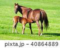 サラブレッド銀座 サラブレッド 馬の写真 40864889