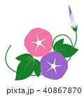 朝顔 花 蕾のイラスト 40867870