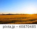 菜の花畑 菜の花 菜花の写真 40870485