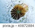 タンポポの綿毛(わたげ)とビックバンのような水滴写真 40872884