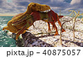 3D rendering scene of the giant dinosaur 40875057