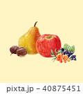 りんご リンゴ 林檎のイラスト 40875451