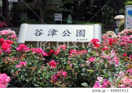 谷津公園 千葉県習志野市 40882411