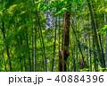 新緑 森 森林の写真 40884396