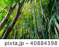 新緑 木 竹の写真 40884398