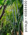 新緑 木 竹の写真 40884400